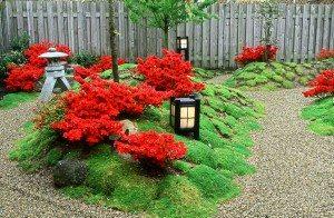 beplanting japanse tuin