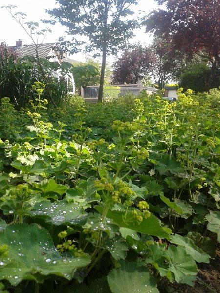 ontwerp duurzame tuin