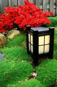 aanleg japanse tuin