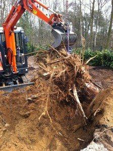 boomstronk verwijderen