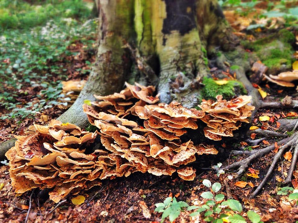 herfst paddenstoel