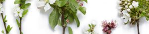 uitsnede bloesembomen