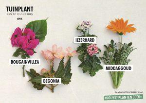 plantnaam overzicht